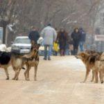 Кучета нападнаха жена в центъра на Силистра
