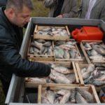 Инспектори на ИАРА са съставили актове на търговски обекти в Тутракан и Свищов за нерегламентирана продажба на риба