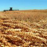 Зърнопроизводители от Силистренско ще се включат в протестните действия