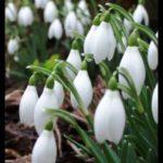 Пролетни празници на културата в Силистра