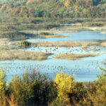 """Природо-научният музей към резервата """"Сребърна"""" остава затворен"""