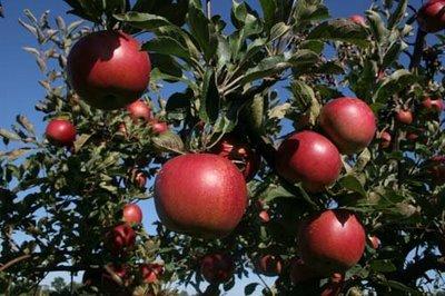 Областният управител гарантира повишено внимание към издаването на служебни бележки на земеделски стопани