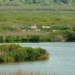 """Езерото """"Сребърна"""" отново достъпно за рибарите"""