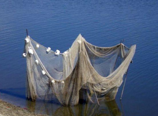 Бракониерски мрежи по река Дунав