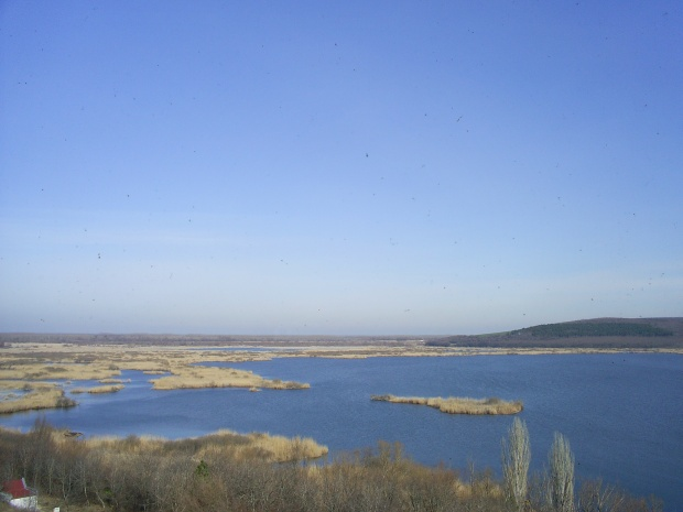 """Ниското ниво на река Дунав не е повлияло негативно върху живота на птиците в резервата """"Сребърна"""""""