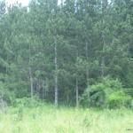Спасени са 50 дка. смесена гора край Тутракан