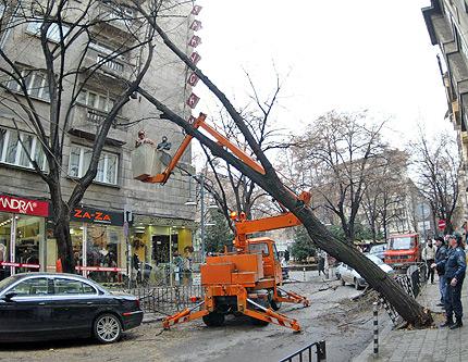 Отстранено е наклонено дърво над пътя