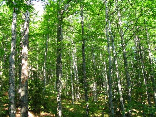 Спасени са 100 декара широколистна гора