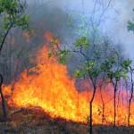 Четири пожара в сухи треви и храсти са загасили пожарникарите в Силистренска област