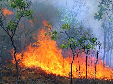 Над двадесет пожара в цялата област са горели през почивните дни