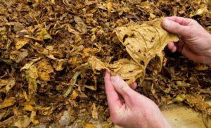 Полицията намери 10 кг тютюн без бандерол