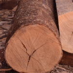 Осем кубика дърва бяха намерени в частен имот