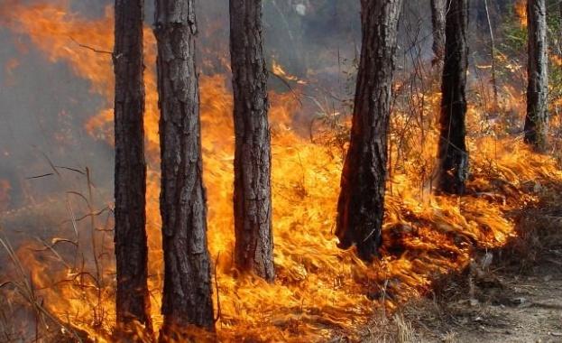 Пожар унищожи декари с орехови дървета
