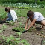 """Държавен фонд """"Земеделие"""" ще приемат млади фермери"""