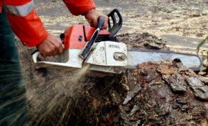 Заловиха двама мъже с незаконно изсечена дървесина