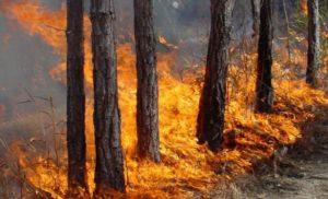 Стотици декари гори бяха спасени от бързата реакция на силистренските пожарникари